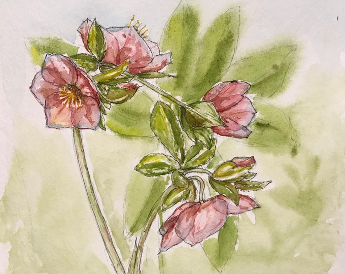 Original hand-painted watercolor, Christmas roses. For Mother's Day, birthday, Valentine's Day.