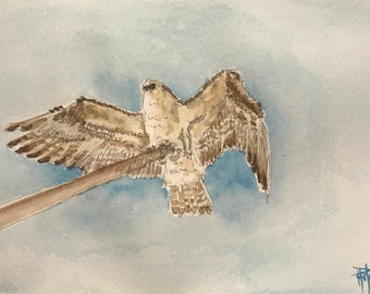 Watercolor, the eagle. Original, hand painted