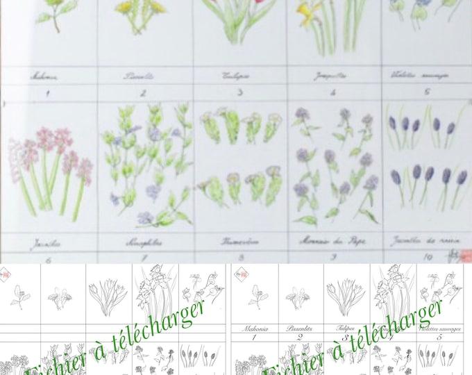 coloriage floral éducatif. compte et reconnaitre les fleurs des jardins