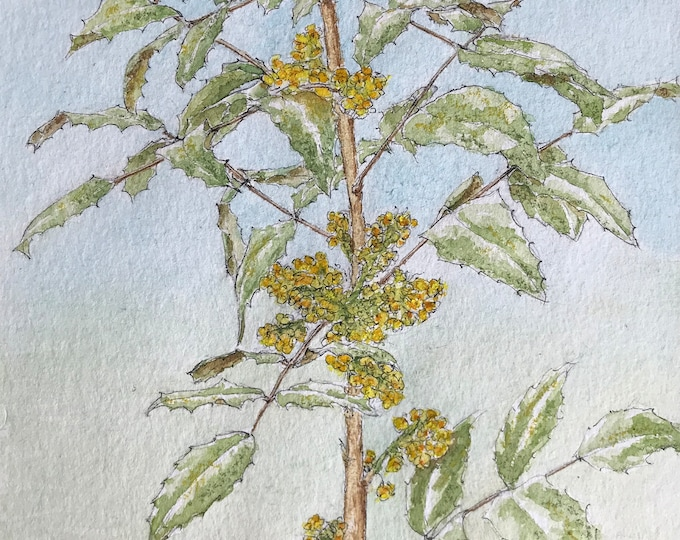 Original watercolor, mahonia in bloom. Hand-painted painting