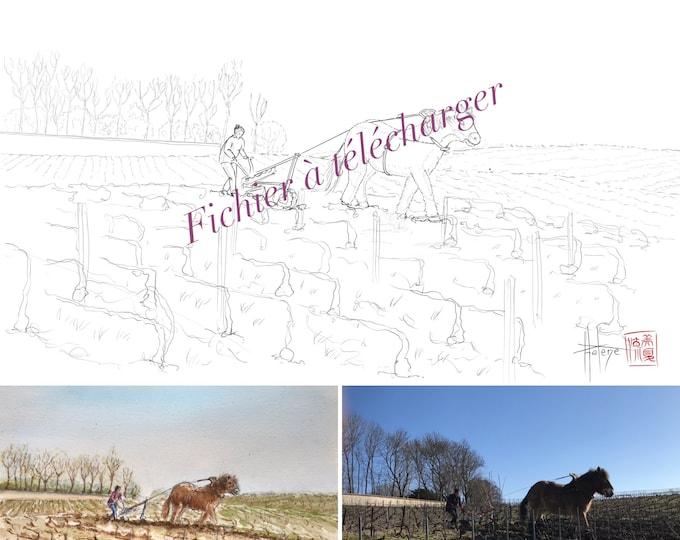 cheval de labour dans les vignes champenoises, à colorier. Fichier à télécharger