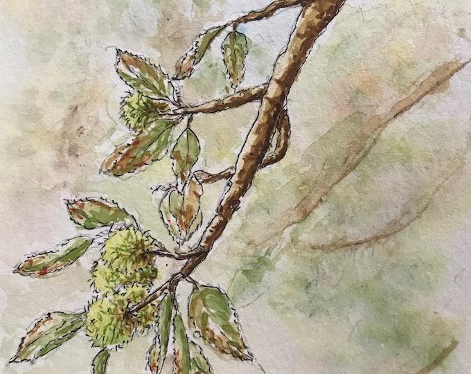 Aquarelle originale format carte postale, les châtaignes. Tableau peint à la main.