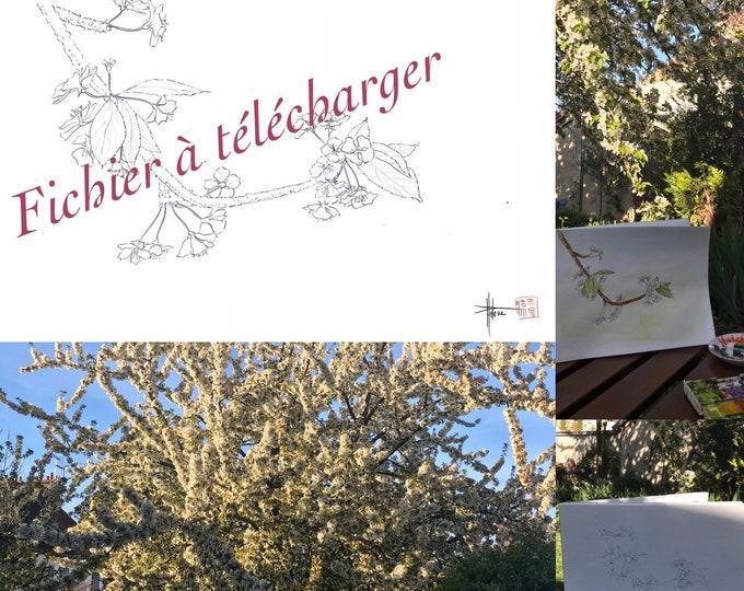 """image à mettre en couleur """"la tulipe du jardin"""" et """"cerisier en fleurs""""- à télécharger"""