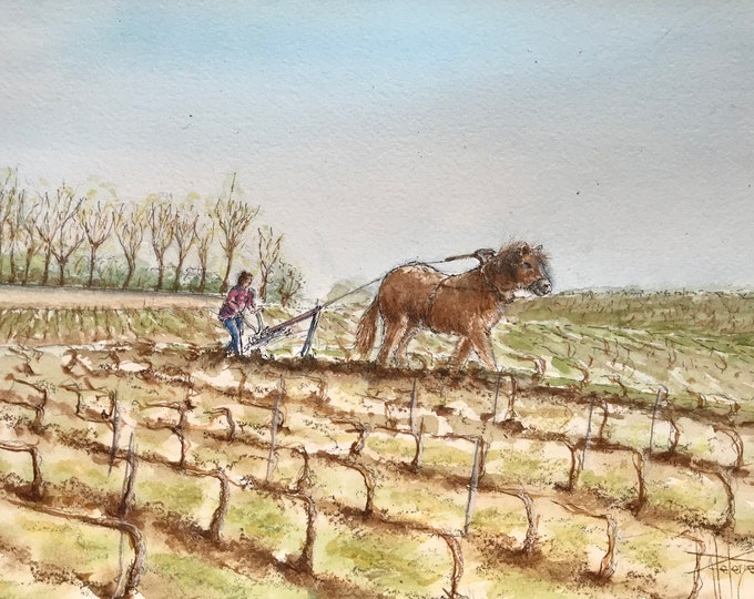 Watercolor, workhorse in the champagne vineyards, original hand-painted.