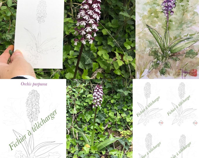 coloriage, orchidée sauvage. fichier à télecharger