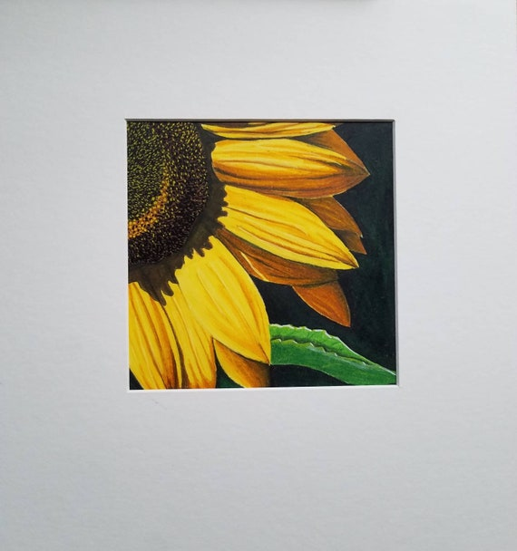 2 Sunflower Denial Colored Pencil Drawing Etsy