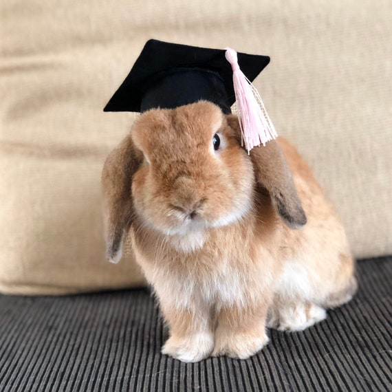 Graduation Hat For Lop Eared Bunny Rabbits And Other Small Etsy