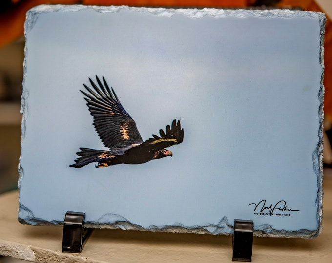 Slate Photographic Art of Wedge Tailed Eagle. 14cm x 19cm