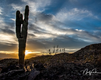 Desert Cactus, Arizona USA - Photographic Wall Art