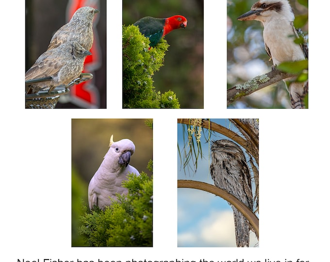 Australian Birds Note Card set of 5 A6 cards with envelopes