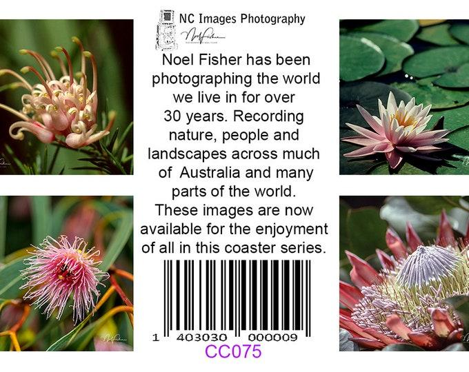 Australian Wildflowers, Coasters set of 4