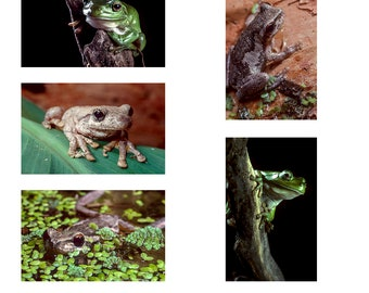 Australian Frogs A6 Note Card pack