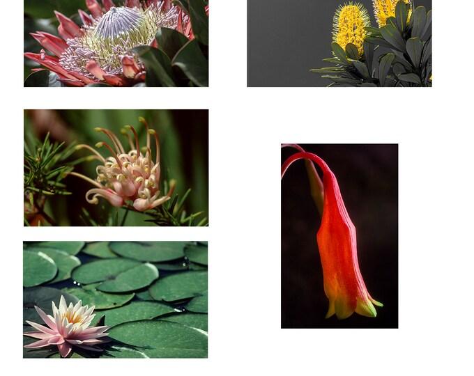Australian Flower Note cards set of 5 A6
