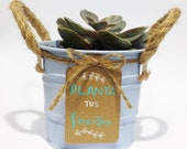 Canned cactus, indoor succulents
