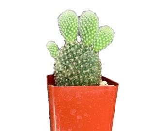 Doseof Succulents