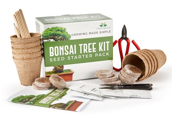 Bonsai Tree Starter Kit Grow Your Own Bonsai Trees From Seeds Etsy