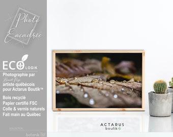 Feuille érable cadre bois / Photographie originale / Art photographique tonalité brune