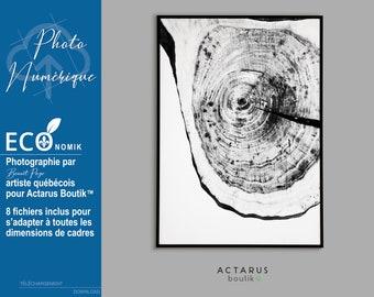 Printable poster, Nature poster, wood-slice print, black and white poster, original photography, wall art, wall print