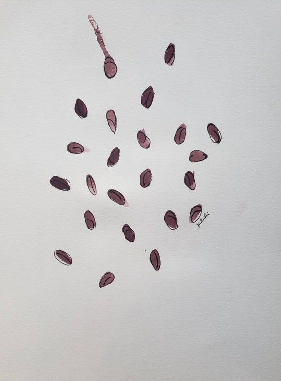 Coffee bean watercolor