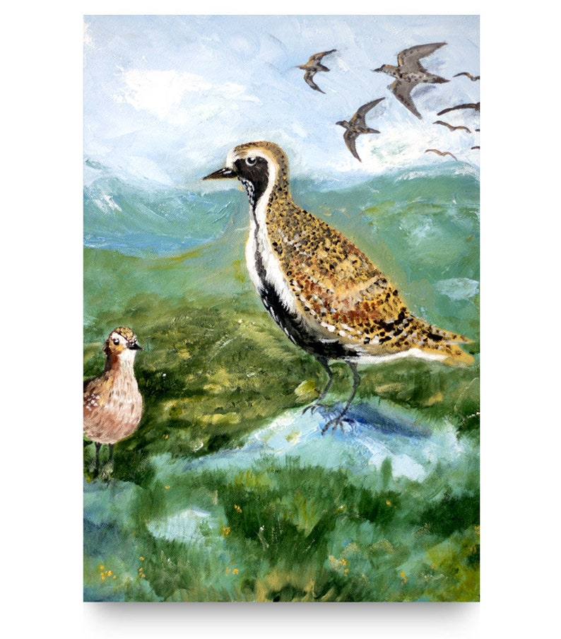 Golden Plover. Acrylic wildlife / bird painting. Isle of image 0