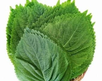 깻잎 perilla leaves seeds(50+)