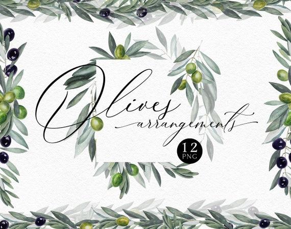 art clipart Olives PNG file Watercolor Elements Illustration