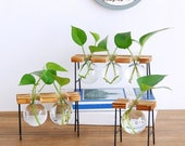 Hydroponic Office Planter on a Metal Plant Stand, Glass Vase, Glass Planter, Glass Terrarium, Water Plant Holder, Office Decor, Mini Planter