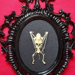 Custom mounted and framed bat