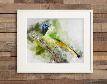 Watercolor Green Jay Fine Art & Canvas Print