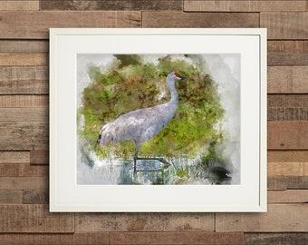 Watercolor Sandhill Crane Fine Art or Canvas Print