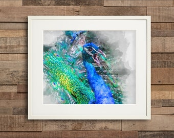 Watercolor Peacock Full Feathers Fine Art or Canvas Print