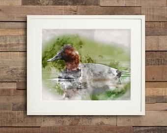 Watercolor Canvasback Duck Fine Art & Canvas Print
