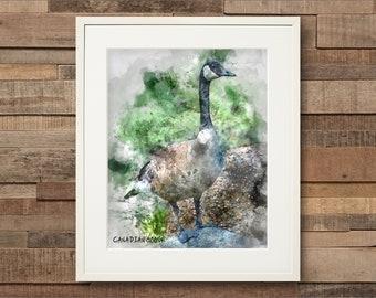 Watercolor Canada Goose Fine Art & Canvas Print