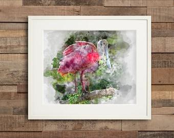 Watercolor Roseate Spoonbill Fine Art & Canvas Print