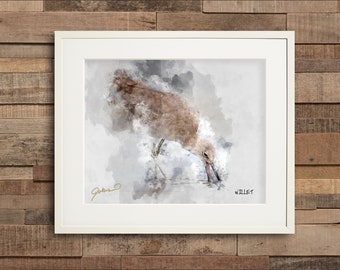 Watercolor Willet Fine Art or Canvas Print