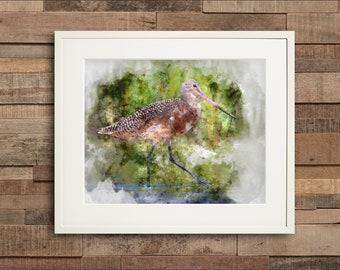 Watercolor Marbled Godwit Fine Art or Canvas Print