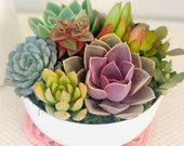 Colorful Live Succulent Arrangement in Ceramic White bowl Planter, Thank you Gift, Birthday gift,Mother s Day gift, succulents for mom