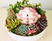 Pink Lucky Cat Live Succulent Arrangement in Ceramic White Planter, Thank you Gift, Birthday gift,Mother s Day gift,Gift for her, Pink Cat