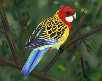 DIGITAL Eastern Rosella / Birds of Australia
