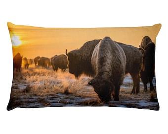Where The Bison Roam. Colorado.