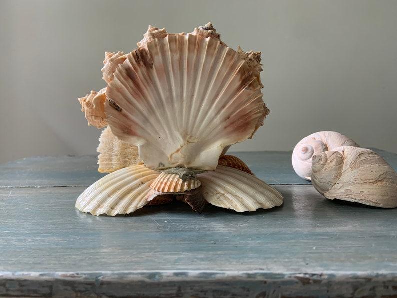 Goddess Art Spiritual Goddess Beach Art Natural Shell Art Kitsch Art Home Altar MADONNA SHELL SCULPTURE: Shell Art Madoona