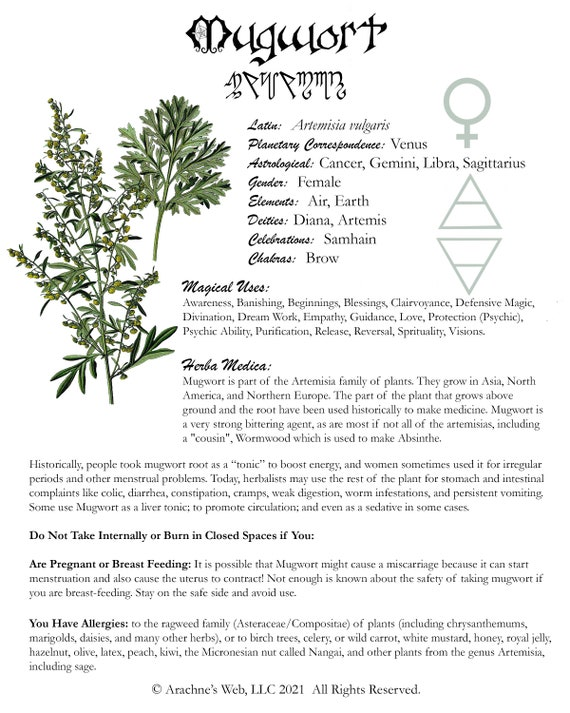 Mugwort Book of Shadows Page, Grimoire Art Page, Witch's Herbal Page for Mugwort