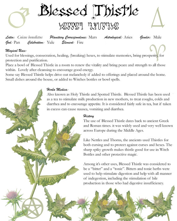 Blessed Thistle Book of Shadows Page, Grimoire Art Page, Witch's Herbal Page for Blessed Thistle