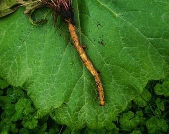 Roots Berries & Barks Dried Herb Sampler Apothecary Starter Kit Herbalism Ritual Medicinal Chakra Organic Wildcrafted Healing Herbal Set