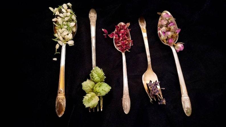 Apothecary Starter Kit Dried Herb Sampler Herbalism Ritual image 0