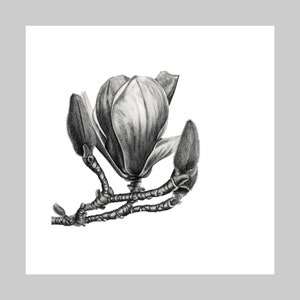 Giclee Art Print Limited Edition Graphite Pencil Drawing Archival Quality Aeonium Exotic Plant