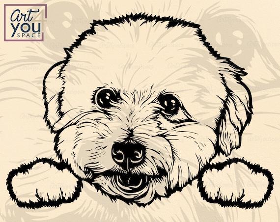 Bichon Frise Vector Dog Svg Cricut Peek A Boo Head Paw Etsy