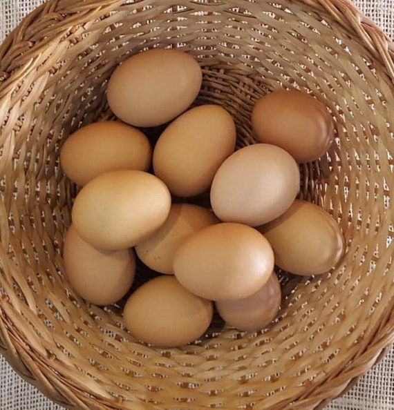 PRICE REDUCED! Natural, organic hollowed brown eggs