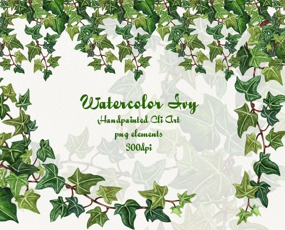 Ivy Watercolor Clip Art Winter Plant Clipart Poison Ivy Etsy,Crib Tents Safe