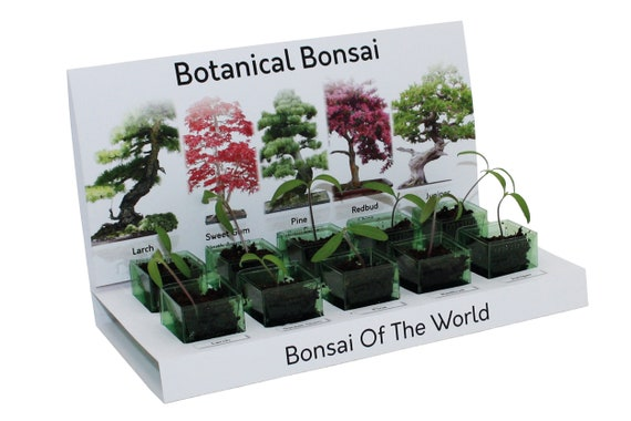 Bonsai Tree Grow Your Own Kit 5 Most Popular Varieties To Grow Etsy